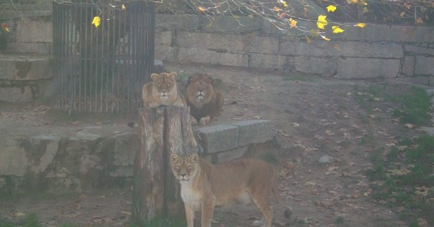 Parque zoológico de A Madroa